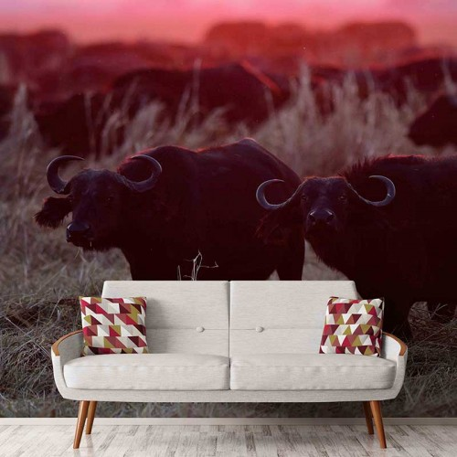 Cape Buffalo Sunset
