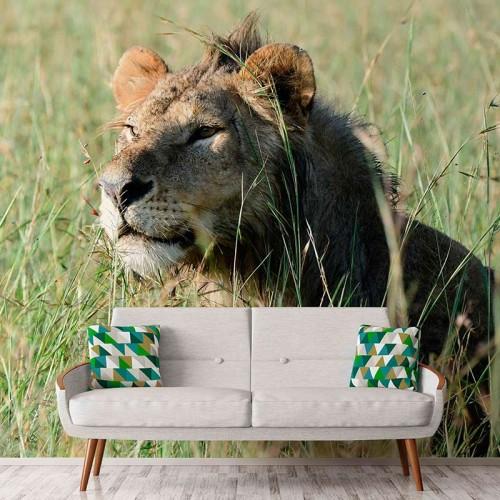 Cautious Lion